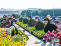 DXB Mirracle Garden 1 shutterstock