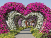 DXB Mirracle Gardens shutterstock